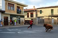 Santacara: Vacas de Santos Zapatería Street View, Saints, Cows, September