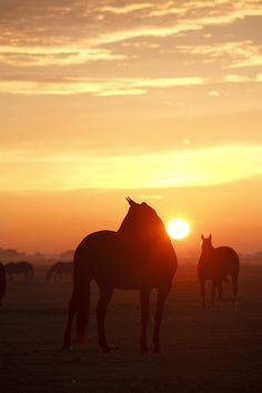 Horses in Stompwijk - Netherlands | Tom Roeleveld