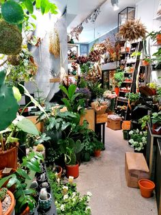 Visiitti Opuntiaan Tampereella Plants, Flora, Plant, Planting