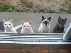 caturday:  The beggers squad