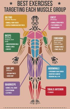 Master Your Muscles Optimize Your Workout fitness muscles exercise exercise tips muscle exercise routine weight lifting bodybuilding. Fitness Workouts, Fitness Motivation, Sport Fitness, Body Workouts, Muscle Fitness, Muscle Nutrition, Workout Routines, Workout Men, Muscle Food