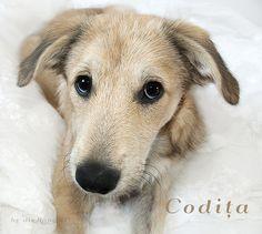 Unsere kleine Codita durfte vor unsere Kamera. Wir sind sehr stolz auf sie.