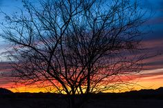 Gorgeous tree silhouette and love the color banding in this sunset photo!