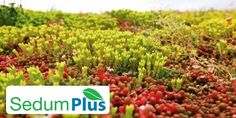 Sedum Plus Green Roof Mat