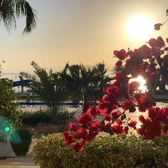 Und noch ein kleiner Vorgeschmack auf unser Hotel in #Jordanien das @talabayresort {Werbung} das wir euch demnächst noch genauer vorstellen! Am Blog verraten wir euch gerade unsere 15 Reisetipps für Frühling und den Frühsommer und Jordanien ist natürlich auch mit dabei #aqaba #akaba #talabay #talabayresort #jordanienreise #urlaub #rotesmeer #visitjordan #tipps #petra #petrajordan #jordania #travelgram #lifestyleandtravel #reisebloggerat #gindeslebensblog #reisetipps #sightseeing #instatravel… Christmas Tree, Holiday Decor, Instagram, Petra, Travel, Gin, Highlights, Home Decor, Blog
