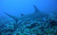 6 Shark Myths Solved to Keep You Safe This Summer #SharkWeek