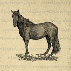 Horse Printable Image Graphic Animal Download Digital Illustration Antique Clip Art. Vintage printable digital graphic. This high resolution digital image is great for iron on transfers, printing, tote bags, t-shirts, pillows, tea towels, and many other uses. Great for use on etsy items. This graphic is high quality, high resolution at 8½ x 11 inches. Transparent background version included with every digital image.