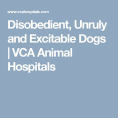 Disobedient, Unruly and Excitable Dogs | VCA Animal Hospitals