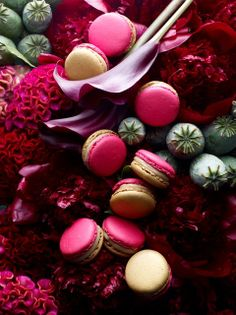Garden Treasures 8: Pierre Hermé macarons - April 2014. The eight traditional treasures of China, Lotus Seeds, Red Datte, Wolfberry, Bud Roses, Skin dried orange, dried longan, Chrysanthemum, Ostmanthus. / Photo: Laurent Fau & Food design: Coco Jobard