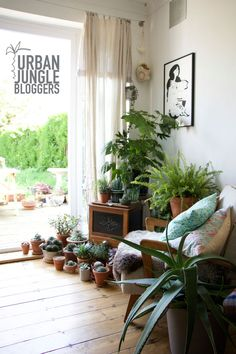 What a gorgeous plant-filled corner, especially on such a (currently) gloomy day! Buy Indoor Plants, Indoor Palms, Indoor Trees, Patio Plants, Indoor Garden, Tree Interior, Interior Design Plants, Jungle Gardens, Growing Flowers