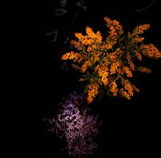 sarah illenberger:生花による花火で年明け|TOKYO DESIGN WEEK 東京デザインウィーク