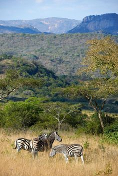 Tomjachu Bush Retreat | Specials 4 Africa