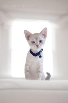 cute in white