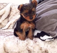 Perrie's new dog, Teddy!