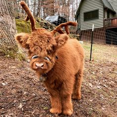 65 Baby Animals That Can Fill Your Heart With Joy - - Tiere - Itens para Cães Cute Baby Cow, Baby Cows, Cute Cows, Baby Farm Animals, Baby Donkey, Cow Pictures, Baby Animals Pictures, Cute Animal Pictures, Cow Pics