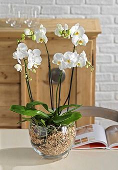 I Just bought amazing flowers!, You can collect images you discovered organize them, add your own ideas to your collections and share with other people. Indoor Orchids, Artificial Orchids, Orchids Garden, Indoor Plants, Orchid Terrarium, Orchid Planters, House Plants Decor, Plant Decor, Orchid Flower Arrangements