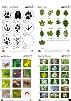Nature Detective game - super cool guides to identifying plants and animals. Nature Hunt, Theme Nature, Nature Study, Nature Nature, Forest School Activities, Nature Activities, Science Activities, Preschool Science, Science For Kids