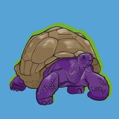 Practicing with my I traced lines from a photo. traced those lines in and then added simple with I like turtles and Drawing Tablet, Photographs Of People, Tortoises, Vector Design, Turtles, My Drawings, Illustrator, Images, Digital Art
