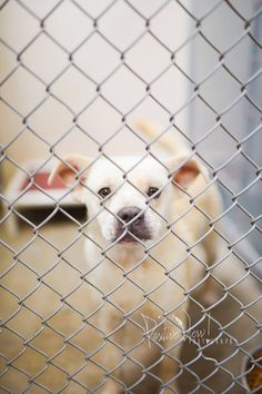 CODE RED ...TO BE DESTROYED 7/14!! Cage 48 Truman  Impound #2592  Shep X M 2 year (white) Intake 7-2-14 Due out 7-9-14  Roswell Animal Control  705 E. McGaffey Roswell, NM, 88203 575-624-6722
