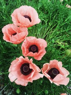From instagram 30 images of inspiration pinterest layer pink poppies see more of emmylowephotos vsco mightylinksfo