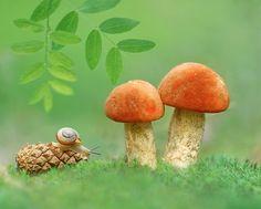 Фотограф Александр Гвоздь (Aleksandr Hvozd ) - На прогретых полянах... #1819820. 35PHOTO