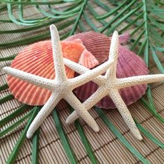Finger Starfish Boutonnières! A classy, beachy touch to your grooms attire'