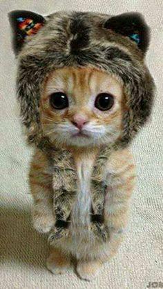 [:es]GATINHOS LINDOS[:] - GATINHOS #gatos #gatinhos #gatoslindos #cats #kitten