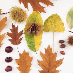➸ Trésors d'automne ➸