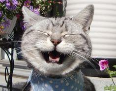 《貓的笑出來》笑咪咪表情實在是太可愛啦♥