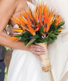 Orange bird of paradise tropical wedding bouquet, photo by Victor Sizemore Photography. Had one of these in my bouquet :) Tropical Wedding Bouquets, Neutral Wedding Flowers, Beach Wedding Flowers, Bridal Flowers, Flower Bouquet Wedding, Rustic Flowers, Tropical Weddings, Carnation Wedding, Hawaii Wedding
