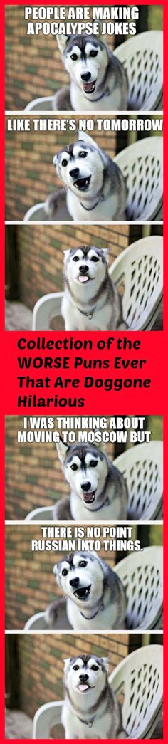Worse Puns Ever Made That Are Hilarious And From A Cute Dog see all >> http://omgshots.com/3593-worst-puns-ever-that-are-doggone-hilarious.html