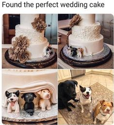 Food Stealin' Doggo Memes Dog Memes) - World's largest collection of cat memes and other animals Cute Wedding Ideas, Wedding Goals, Perfect Wedding, Our Wedding, Wedding Planning, Dream Wedding, Wedding Inspiration, Wedding Meme, Wedding Stuff