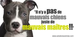 Yes to the pitbulls, no to prejudice Nature Animals, Animals And Pets, Cute Animals, Quebec, Breed Specific Legislation, Really Cute Puppies, Pregnant Dog, Dog Information, Sad Pictures