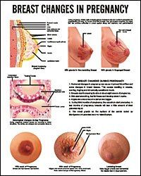 Kids Discover Particular Darkened Areolas Early Pregnancy 2019 Very Early Pregnancy Symptoms Pregnancy Signs And Symptoms Early Pregnancy Signs Pregnancy Quotes Pregnancy Stages Pregnancy Workout 3 Weeks Pregnant Very Early Pregnancy Signs, Very Early Pregnancy Symptoms, Pregnancy Signs And Symptoms, Unexpected Pregnancy, Pregnancy Stages, Period Hacks, Period Tips, Pee Color, Pregnancy Quotes