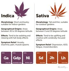 Sativa, Indica, and Hybrid: What's the Difference Between Cannabis Types? - Leafly