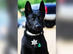 PHOTO: Deputy Todd Frazier of the Hancock County Sheriffs Department in Mississippi with his K-9, Lucas, a black Belgian Malinois, in an updated photo. Lucas saved Frazier on Monday when the deputy was ambushed by three men in a remote location.