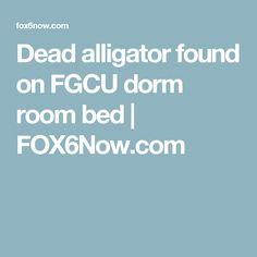 Dead alligator found on FGCU dorm room bed | FOX6Now.com