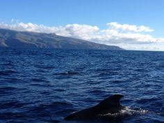 Whale Watching, Valle gran Rey auf La Gomera - Familienurlaub im Winter