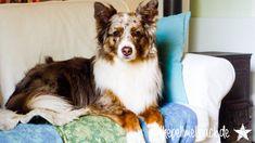 MiDoggy fragte in der aktuellen Blogparade, ob Hund und Job vereinbar wären und wie das funktioniere. Unsere Hunde können nicht nur, sie müssen allein zuhause bleiben. Hund und Job. Ich arbeite sechs Stunden am Tag. Der Lieblingsmann noch länger...
