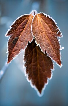 This picture will help in my design unit because it shows the detail and texture of the leaf