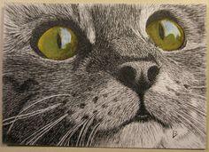 Green-eyed pen & ink cat