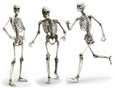 Tuit Nutrition: Is a High Protein Intake Bad for Bones? Sources Of Calcium, Protein Sparing Modified Fast, Weight Bearing Exercises, Smoking Is Bad, Vitamin D Supplement, Human Skeleton, Bone Loss, Arthritis, Ghosts