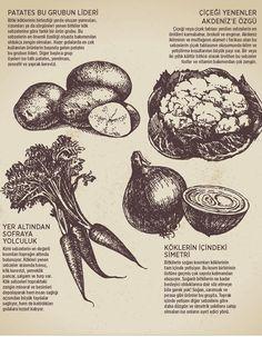 SEBZELERİN SINIFLARI- Doğanın insanlara en cömert davrandığı bitki türlerinin başında sebzeler geliyor. Sebzeler hem  çeşitli hem de çok faydaya sahipler ki; onlara burun kıvırmak için geçerli bir sebep bulmak imkansız! Kökünden yumrularına, yapraklarından meyvelerine kadar sebze bitkilerinin bir ya da birden fazla kısmı mutlaka sofralarda kendine bir yer açıyor. Özellikle kış ayları yaklaşırken bahanesiz ve bol bol tüketilmesi gereken sebzeler yenen kısımlarına göre şöyle sınıflandırılıyor.