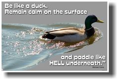 Be Like a Duck. Remain calm on the surface and Paddle Like Hell Underneath. - Michael Caine