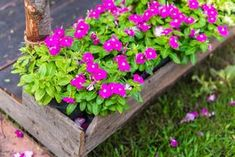 9 kerti virág, amit napos helyre is ültethetsz és még locsolni sem kell! - Bidista.com - A TippLista! Flower Boxes, Container Gardening, Home And Garden, Yard, Outdoor, Garden Ideas, Plant, Window Boxes, Outdoors