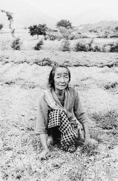 "Village at the foot of the Volcano―Kurokami Mura: Old woman cutting grass from ""Human Land"", ca. 1954-1957 by Ikko Narahara"