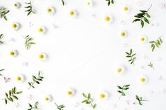 Floral frame with chamomile by Floral Deco on @creativemarket