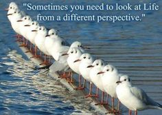"""Sometimes you need to look at Life from a different perspective."""