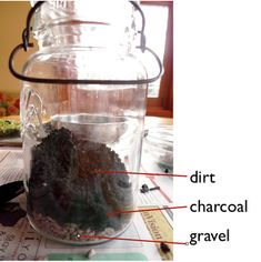 Terrarium instructions (water cycle for WOW journey)
