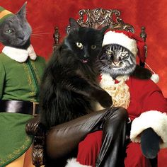 Have you been naughty or nice? #HesCheckinThatListTwice Meowdel: @chicken_n_klink  Everything on HussyCats.com is on sale for the holidays!!!  For a chance to be Hussified, follow @HussyCats on Instagram & use #HussyCats to submit your photos!